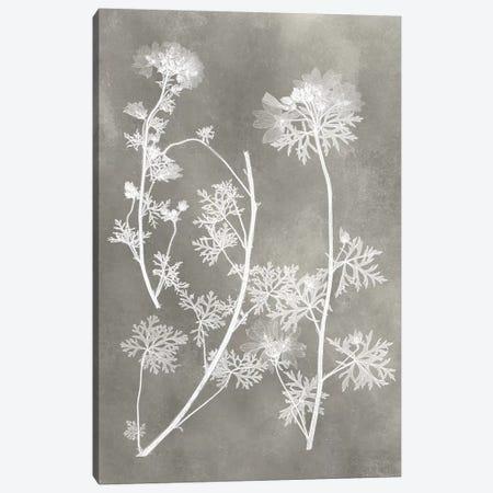 Herbarium Study IV Canvas Print #VSN216} by Vision Studio Canvas Artwork