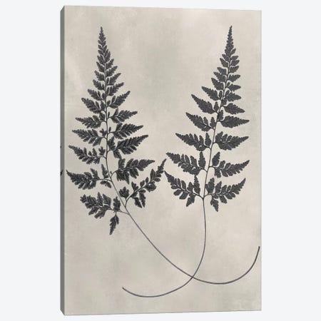 Vintage Fern Study I Canvas Print #VSN232} by Vision Studio Art Print