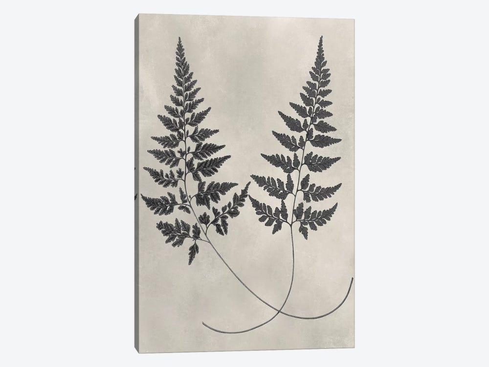 Vintage Fern Study I by Vision Studio 1-piece Art Print