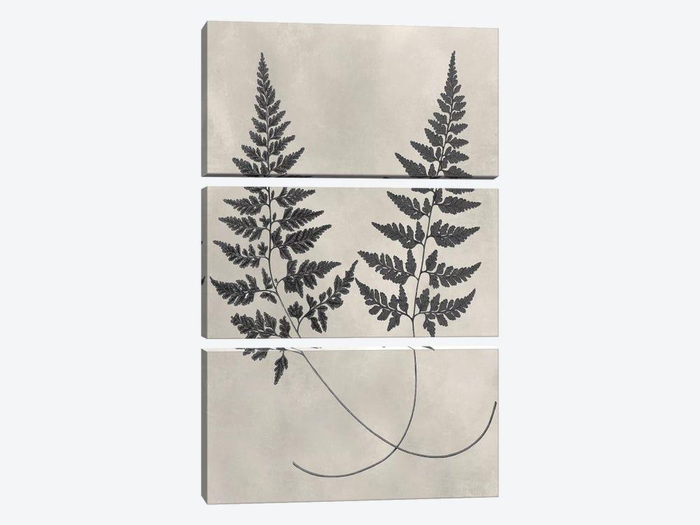 Vintage Fern Study I by Vision Studio 3-piece Art Print