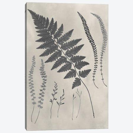 Vintage Fern Study II Canvas Print #VSN233} by Vision Studio Art Print