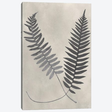 Vintage Fern Study III Canvas Print #VSN234} by Vision Studio Canvas Art