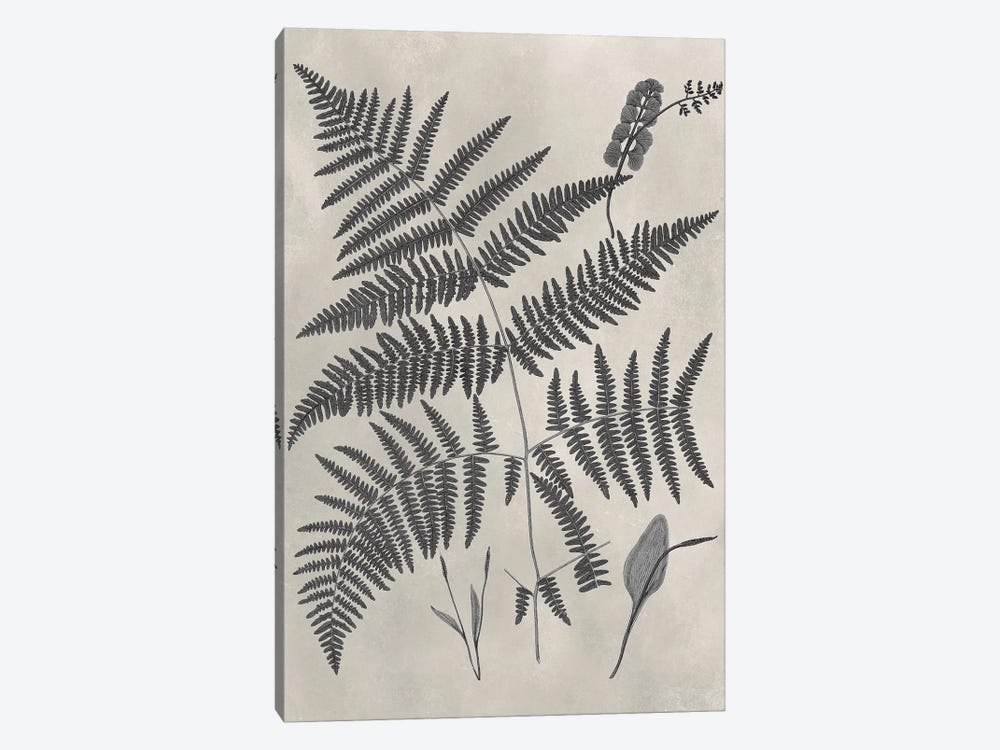 Vintage Fern Study IV by Vision Studio 1-piece Canvas Art