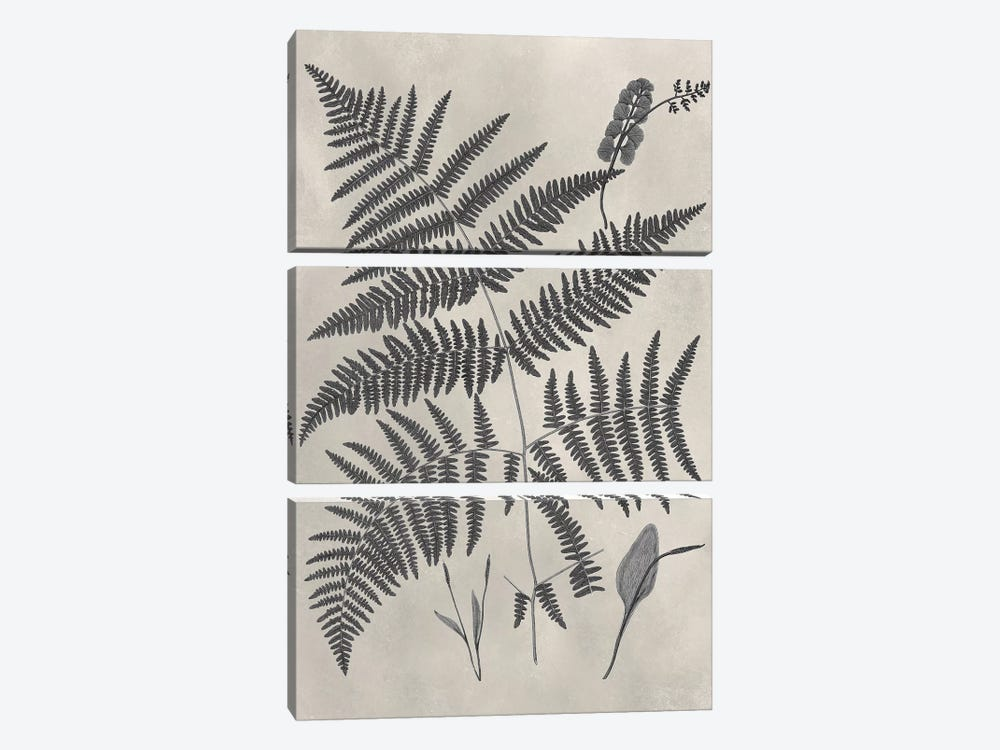 Vintage Fern Study IV by Vision Studio 3-piece Canvas Artwork