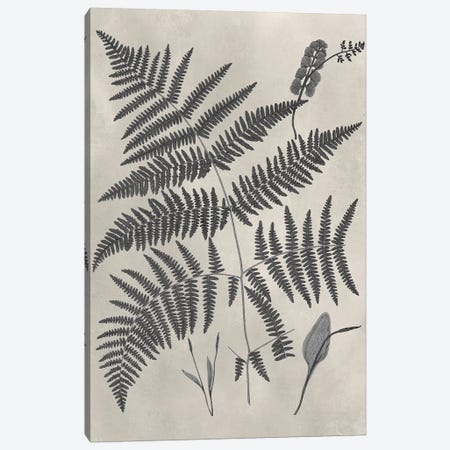 Vintage Fern Study IV Canvas Print #VSN235} by Vision Studio Canvas Artwork