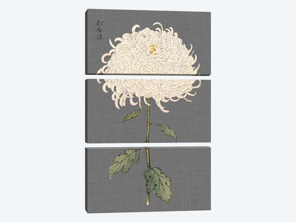 Dramatic Ivory Mums II by Vision Studio 3-piece Canvas Art Print