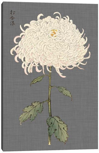 Dramatic Ivory Mums II Canvas Art Print