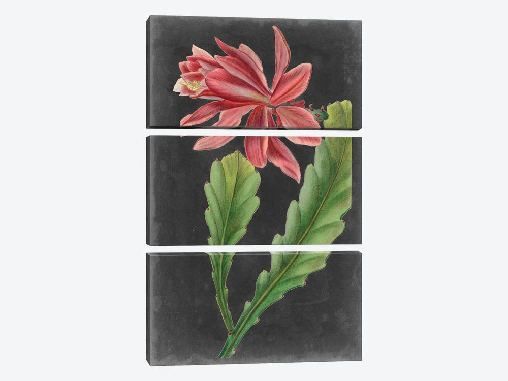 Dramatic Tropicals I by Vision Studio 3-piece Canvas Art