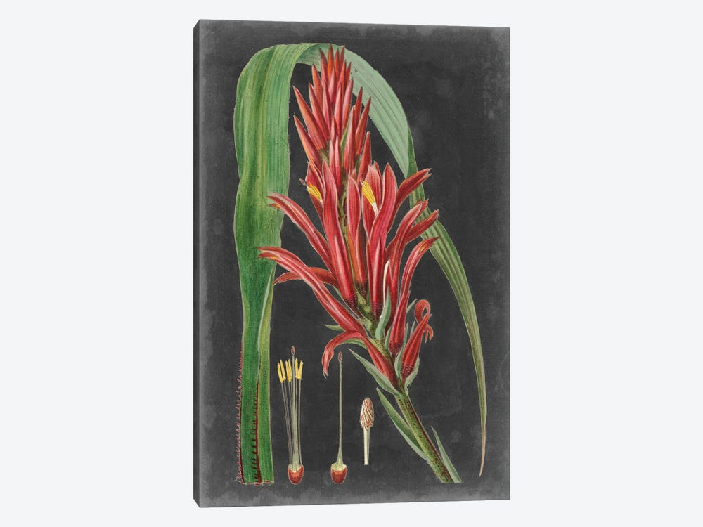 Dramatic Tropicals II by Vision Studio 1-piece Art Print