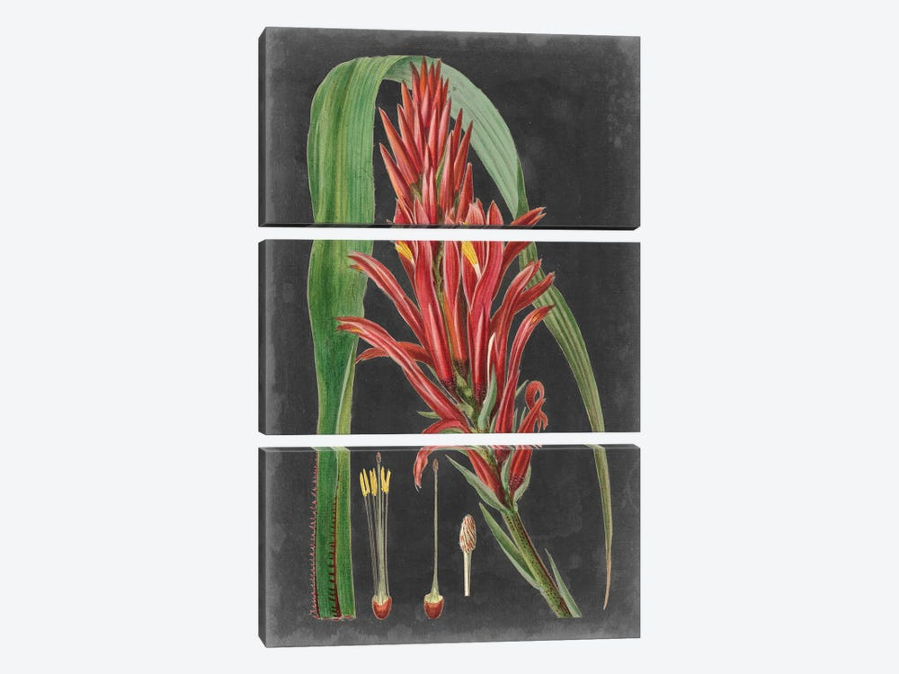 Dramatic Tropicals II by Vision Studio 3-piece Canvas Art Print