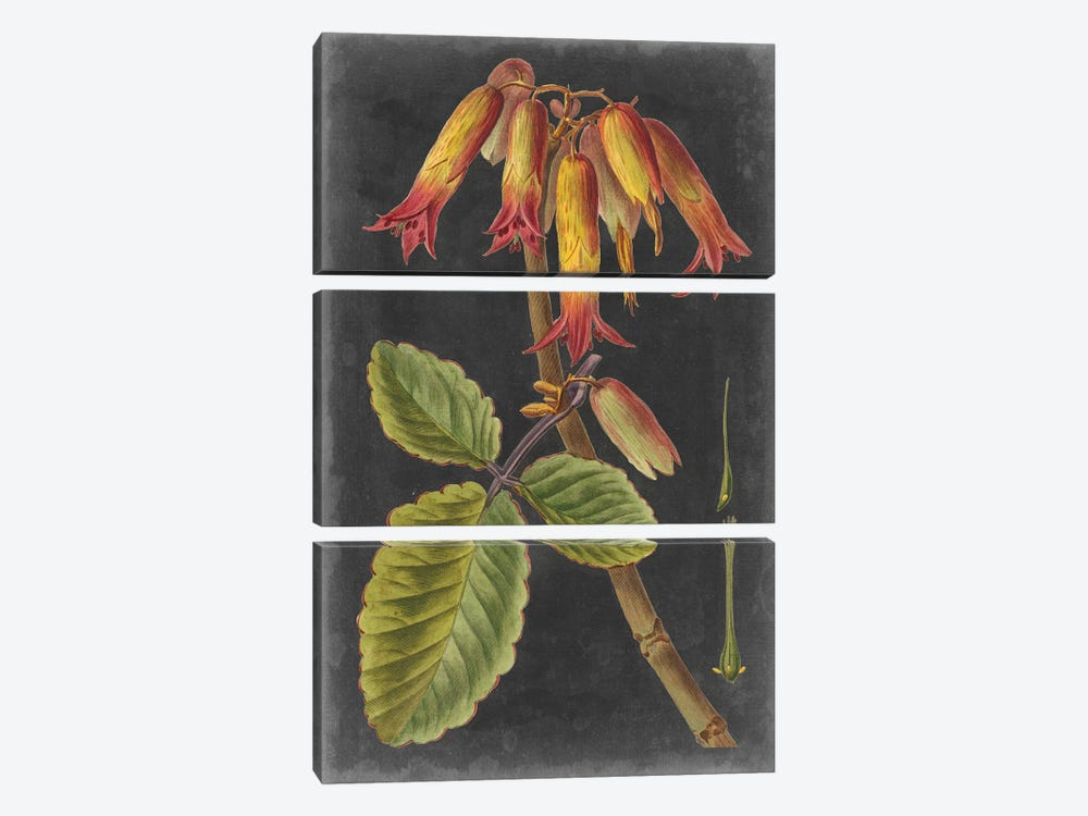 Dramatic Tropicals III by Vision Studio 3-piece Canvas Art