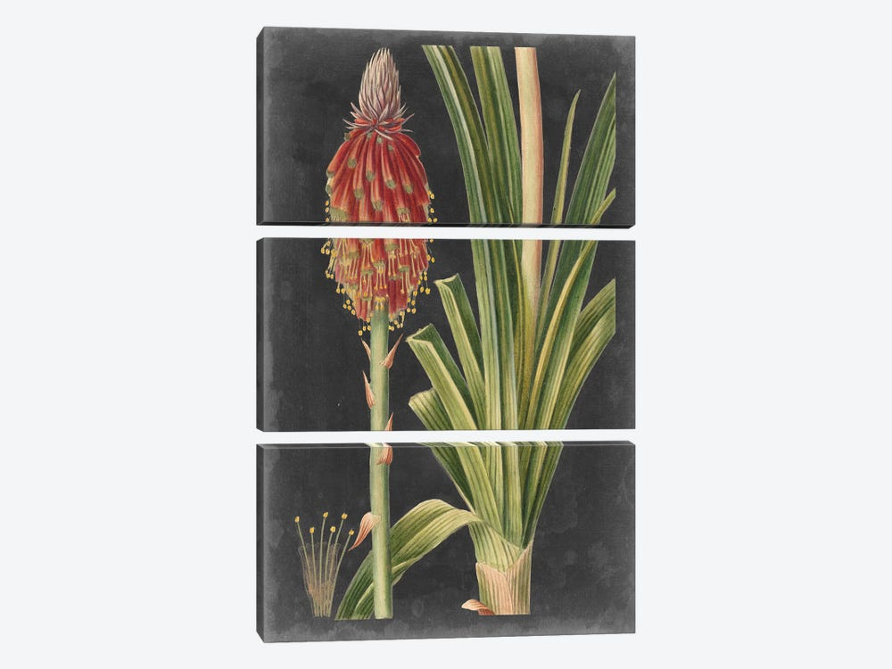Dramatic Tropicals IV by Vision Studio 3-piece Canvas Art Print
