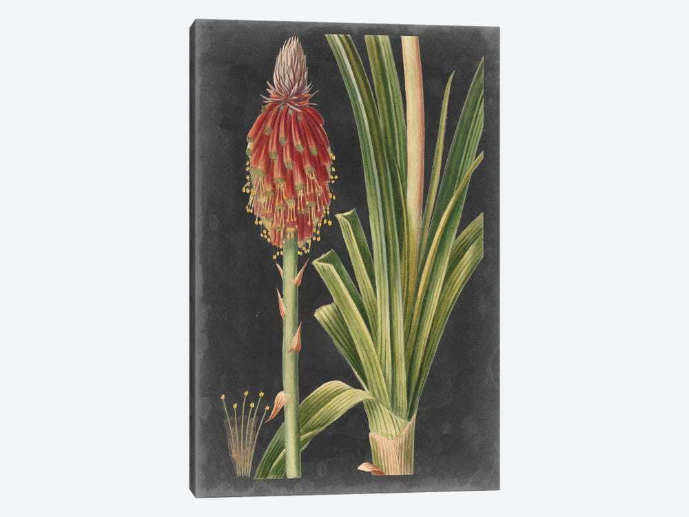 Dramatic Tropicals IV by Vision Studio 1-piece Canvas Print