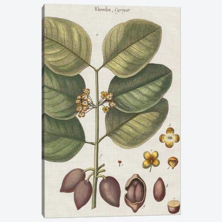 Exotic Botanique II Canvas Print #VSN247} by Vision Studio Canvas Print