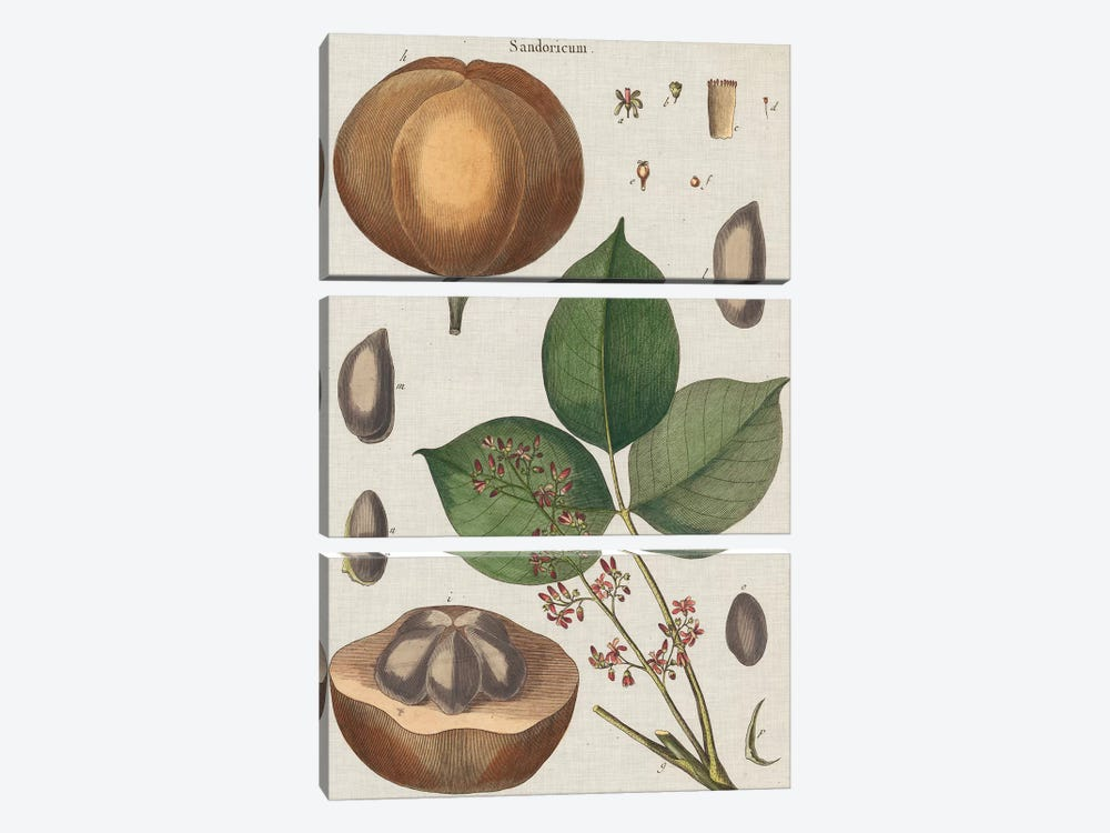 Exotic Botanique III by Vision Studio 3-piece Canvas Wall Art