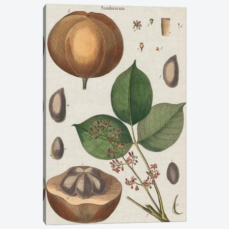 Exotic Botanique III Canvas Print #VSN248} by Vision Studio Canvas Wall Art