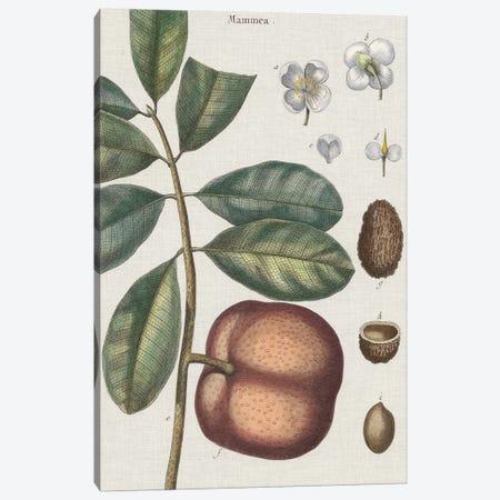 Exotic Botanique IV Canvas Print #VSN249} by Vision Studio Canvas Artwork