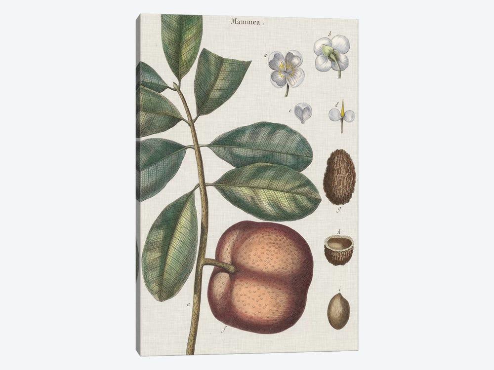 Exotic Botanique IV by Vision Studio 1-piece Canvas Print