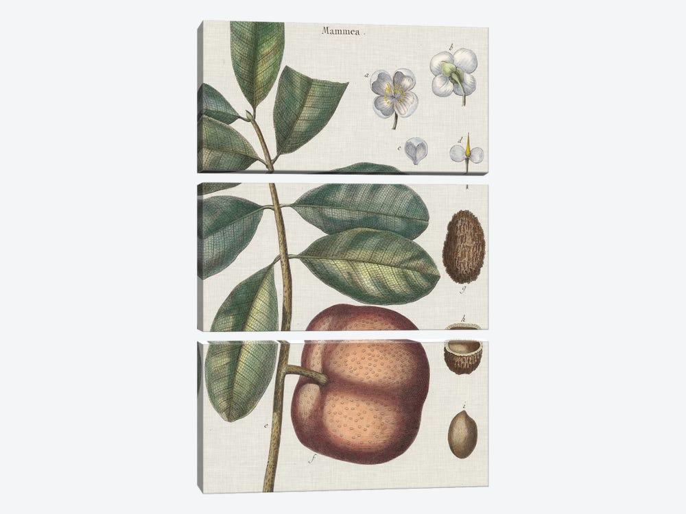 Exotic Botanique IV by Vision Studio 3-piece Art Print