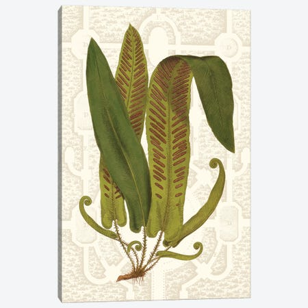 Garden Ferns I Canvas Print #VSN250} by Vision Studio Canvas Print