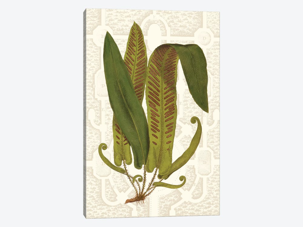Garden Ferns I by Vision Studio 1-piece Canvas Print
