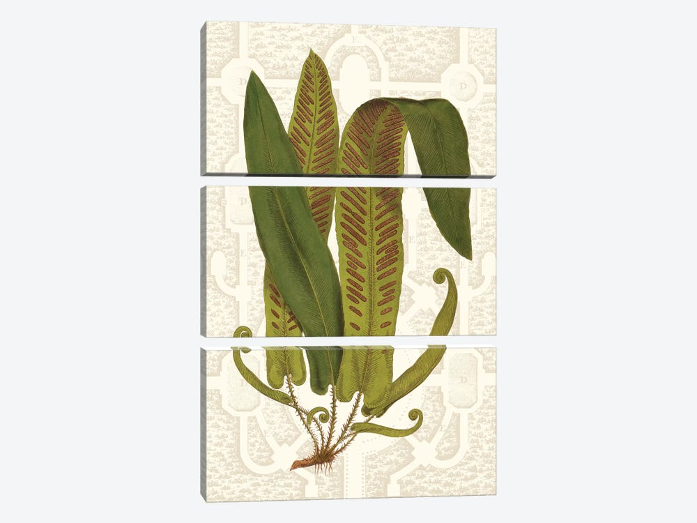 Garden Ferns I by Vision Studio 3-piece Canvas Print