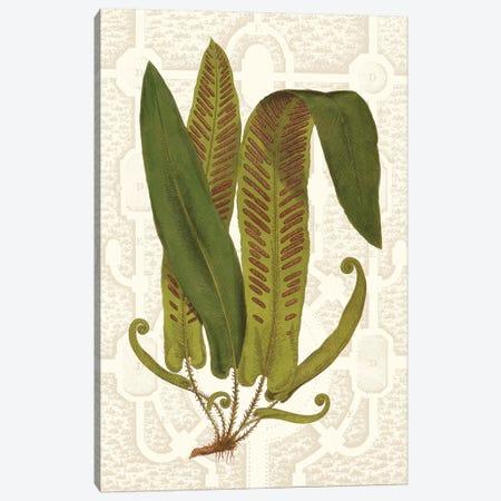 Garden Ferns I Canvas Print #VSN250} by Vision Studio Canvas Print