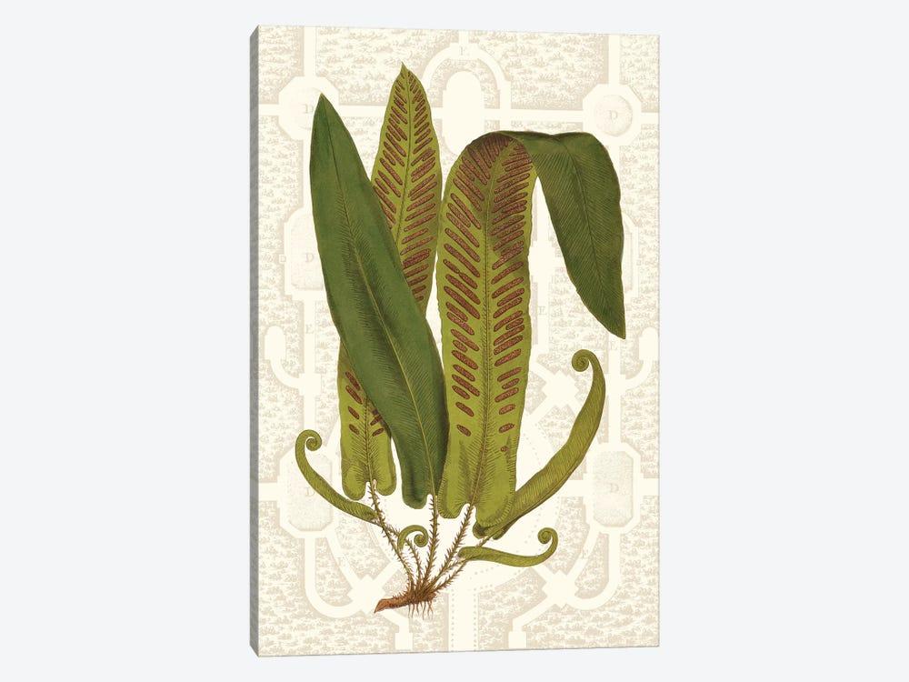 Garden Ferns I by Vision Studio 1-piece Canvas Print