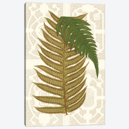 Garden Ferns II Canvas Print #VSN251} by Vision Studio Canvas Art Print