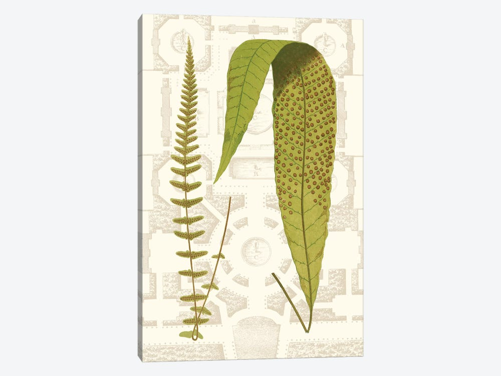 Garden Ferns III by Vision Studio 1-piece Canvas Art Print