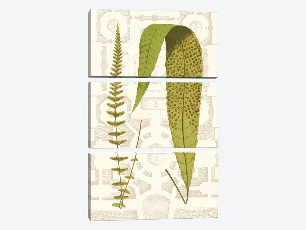Garden Ferns III by Vision Studio 3-piece Canvas Print