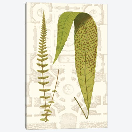 Garden Ferns III 3-Piece Canvas #VSN252} by Vision Studio Canvas Print