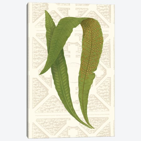 Garden Ferns IV Canvas Print #VSN253} by Vision Studio Canvas Print