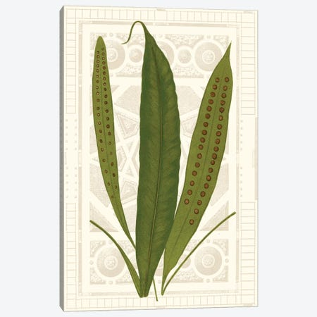 Garden Ferns VI Canvas Print #VSN255} by Vision Studio Canvas Wall Art