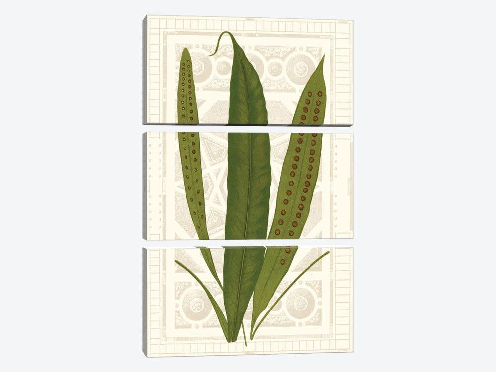Garden Ferns VI by Vision Studio 3-piece Canvas Wall Art