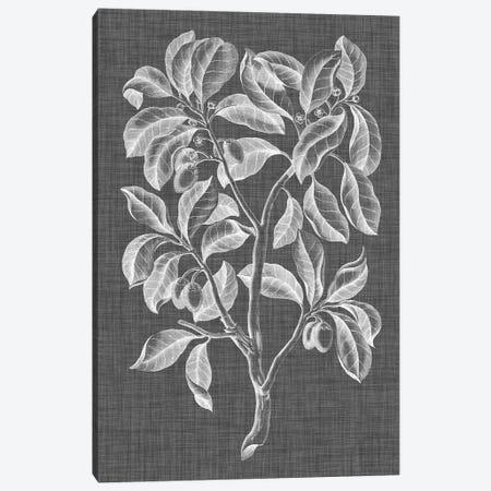 Graphic Foliage I Canvas Print #VSN256} by Vision Studio Canvas Wall Art