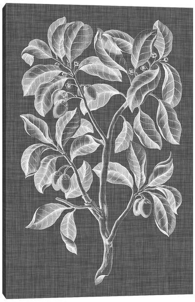 Graphic Foliage I Canvas Art Print