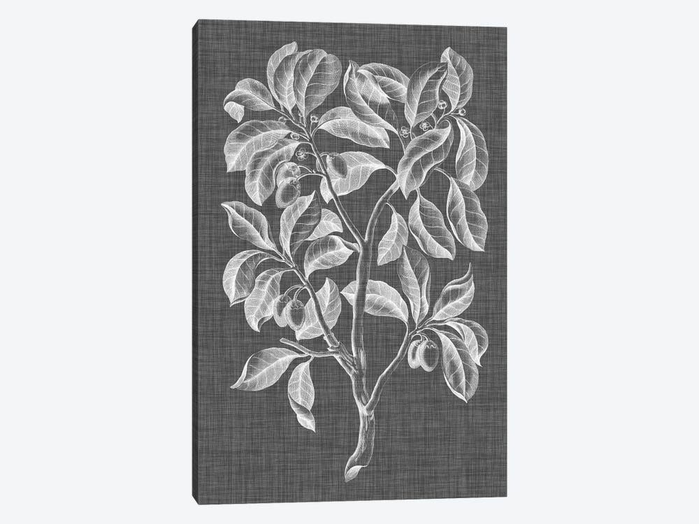 Graphic Foliage I by Vision Studio 1-piece Canvas Art Print