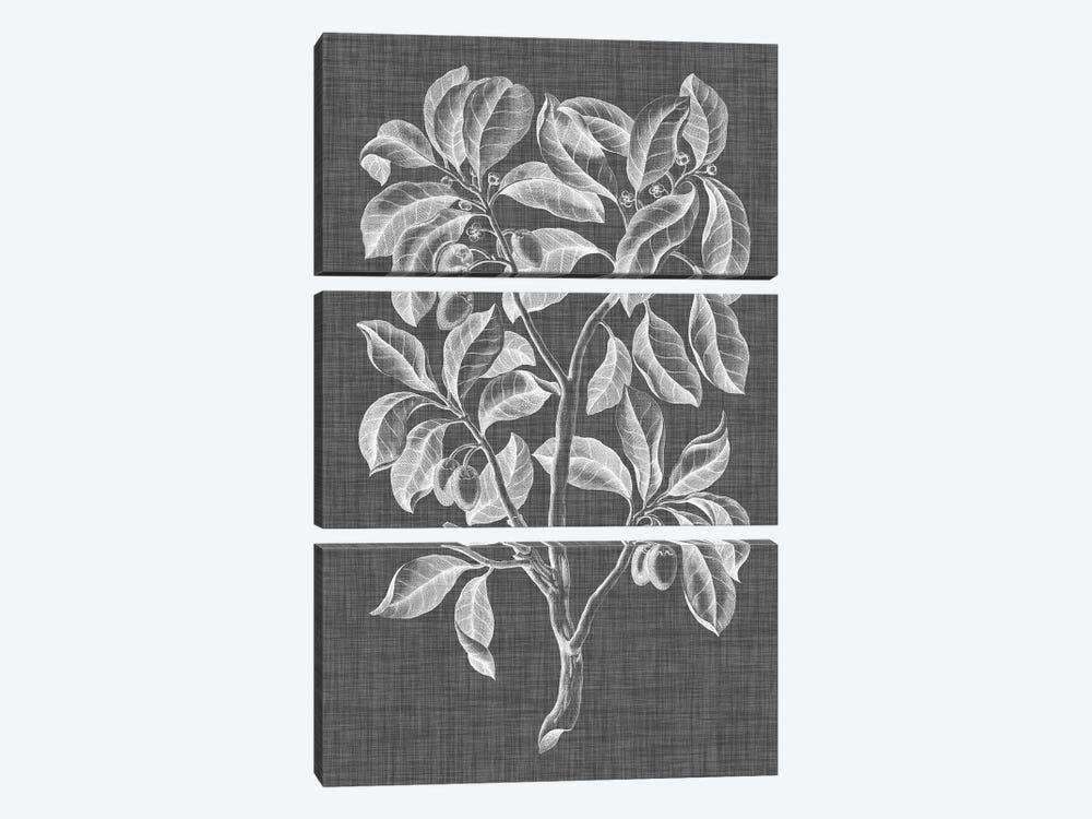 Graphic Foliage I by Vision Studio 3-piece Canvas Print