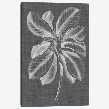 Graphic Foliage II Canvas Print #VSN257} by Vision Studio Canvas Art