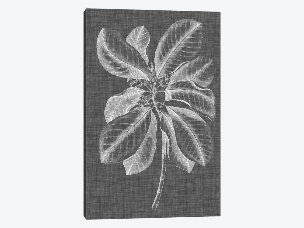 Graphic Foliage II by Vision Studio 1-piece Canvas Artwork
