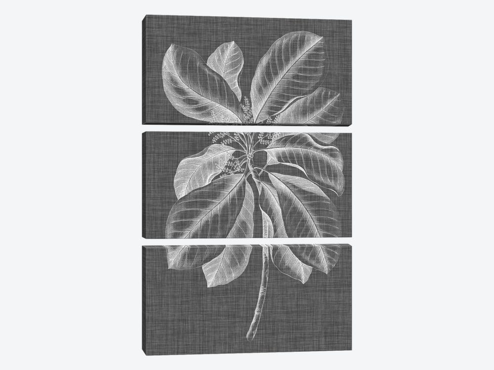 Graphic Foliage II by Vision Studio 3-piece Canvas Wall Art