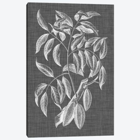 Graphic Foliage III Canvas Print #VSN258} by Vision Studio Art Print