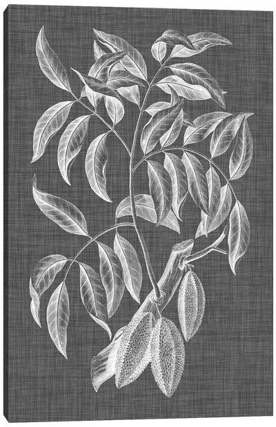Graphic Foliage III Canvas Art Print