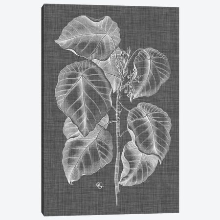 Graphic Foliage IV Canvas Print #VSN259} by Vision Studio Art Print