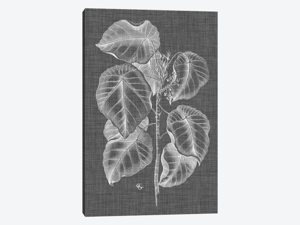 Graphic Foliage IV by Vision Studio 1-piece Canvas Artwork