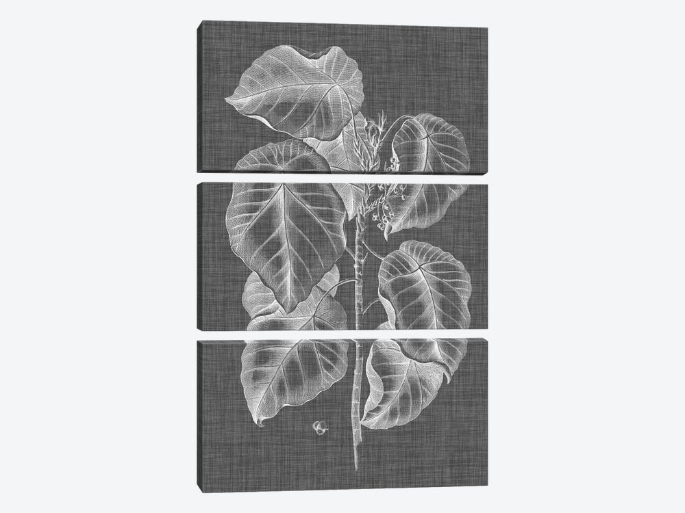 Graphic Foliage IV by Vision Studio 3-piece Canvas Wall Art