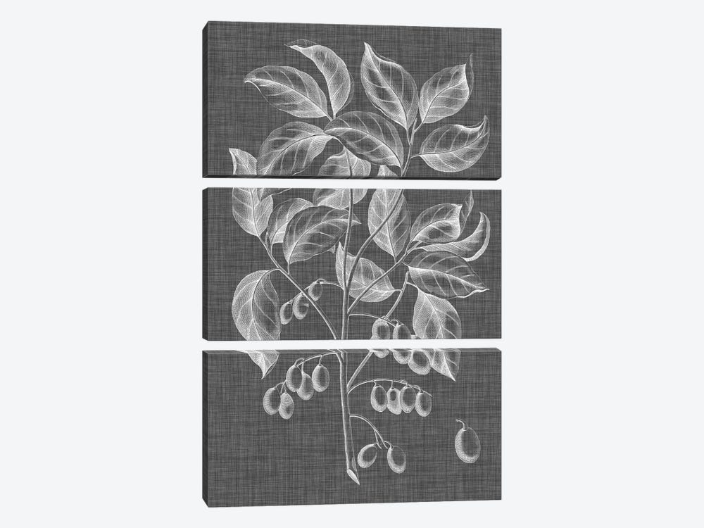 Graphic Foliage V by Vision Studio 3-piece Canvas Artwork
