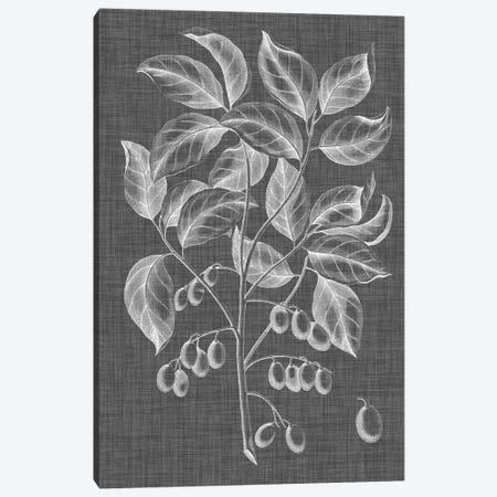 Graphic Foliage V Canvas Print #VSN260} by Vision Studio Canvas Wall Art