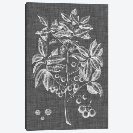 Graphic Foliage VI Canvas Print #VSN261} by Vision Studio Canvas Art